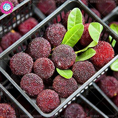 11.11 grande promotion! 10 pcs/lot géant graines baie rouge fraise fruit vert jardin semences d'arbres et la maison plante vivace d'herbes biologiques