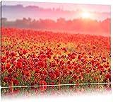 Wunderbare Mohnwiese im Sonnenschein Format: 120x80 auf