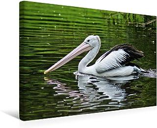 Premium - Lienzo textil, 45 cm x 30 cm, horizontal, diseño de pelicano de gafas, imagen sobre bastidor, lienzo auténtico, impresión sobre lienzo, pájaro y pájaro (CALVENDO Tiere);CALVENDO Animales