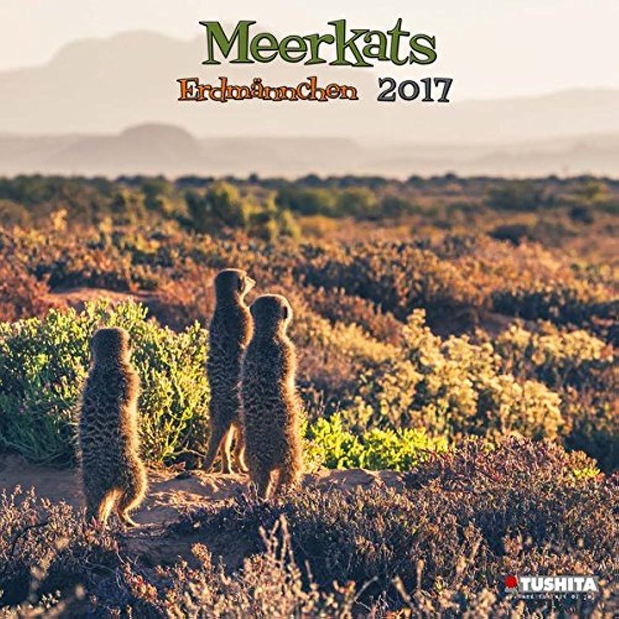 生息地看板デマンドMeerkats 2017 (Wonderful World)