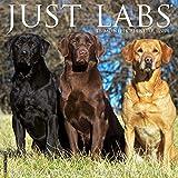 Just Labs 2021 Wall Calendar (Dog Breed Calendar)