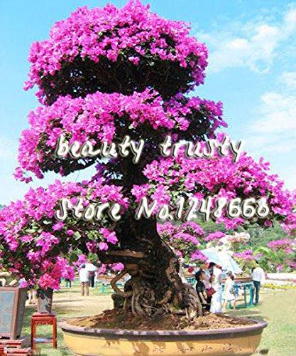 En soldes! Grand basilic feuilles, plantes bonsaï de jardin Fleur Basil semences Graines, graines de légumes fruits environ 50 particules