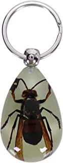TOOGOO Naturally Glowing Dark Animal Wasp Specimen Keychain