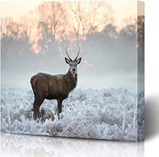 Onete Canvas Prints Painting Artwork 16x16 Young Red Meadow Morning Rutting Deer Antlers Beautiful Buck Standing Frosted Animals Wildlife Wall Art Printing Home Bedroom Living Room Office Dorm