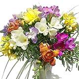 Bunte Freesien - Blumenstrauß mit farbenfrohen Blumen - Inkl. gratis Grußkarte!