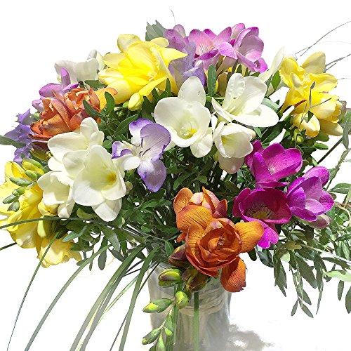 20 bunte Freesien - Blumenstrauß mit farbenfrohen Blumen - Inklusive gratis Grußkarte!