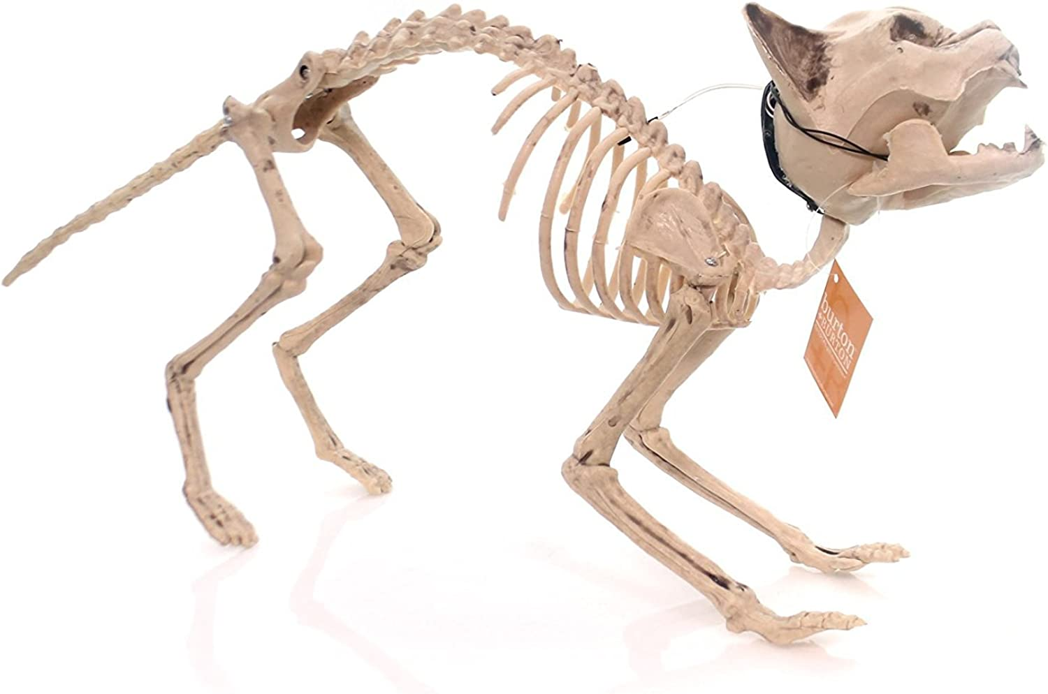 Burton and Burton Skeleton Cat Halloween Decoration with Light Up Eyes Clap Activated by nknown