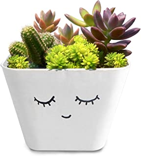 HILLMART Natural Live Cute Succulent Arrangement Plants with Artistic Handmade Little Pot for Desktop & Gift …