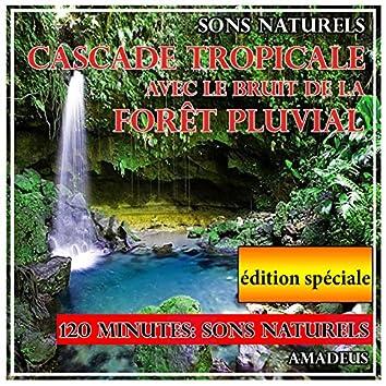 Cascade tropicale avec le bruit de la forêt pluvial: sons naturels: édition spéciale