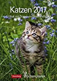 Katzen - Kalender 2017: Wochenplaner, 53 Blatt mit Zitaten und Wochenchronik
