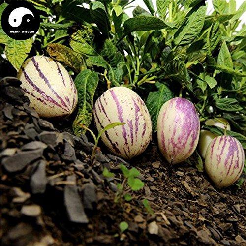 Comprar semillas de melón berenjena de frutas 60pcs planta de ginseng fruta Solanum Muricatum Aiton