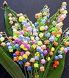 100pcs lirio de las semillas de flor del valle interior raras semillas de orquídeas Campana rico aroma Bonsai Flores de semillas Plantas linda y hermosa