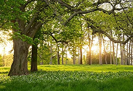 Laeacco 10x6.5ft Forest Backdrop Way to The Deep in The Forest Lawn Sunshine Tall Trees Photography Background Boys Girls Children Party Banner Decor Couple Lover Wedding Portrait Shoot Props