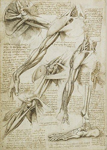 World of Art Global Vintage Anatomie Leonardo da Vinci Studium des Armes und des Fußes, Italien, 14-15 Jahrhundert. 250 g/m², glänzend, Kunstdruck, A3, Reproduktion