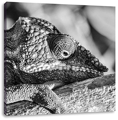 Kameleon van Madagascar Art B & WCanvas Foto Plein | Maat: 70x70 cm | Wanddecoraties | Kunstdruk | Volledig gemonteerd