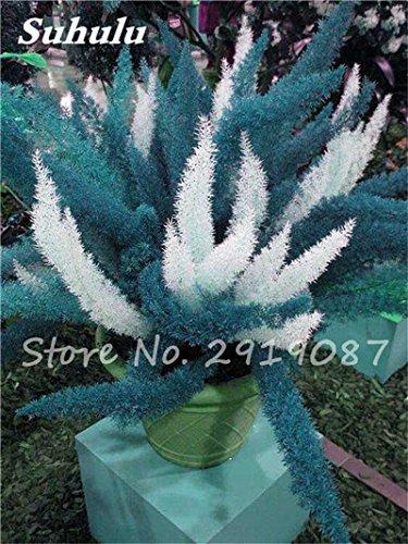 Hot! 120pcs sétaire fleur Bonsai graines, coloré pot sétaire Ferns plantes ornementales Aménagement paysager décoratif Herbe plantez des graines 4