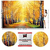 GREAT ART Fototapete Goldener Herbst Birken Allee 336 x 238 cm - Wandtapete 8 Teile Tapete inklusive Kleister