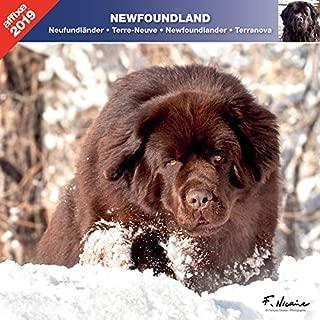 Newfoundland - 2019. Calendar AFFIXE