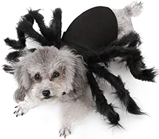 Best black spider dog halloween costume Reviews