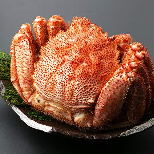 北海道 さっぽろ朝市 毛蟹 570g × 1尾 浜茹で 毛ガニ ボイル 毛がに カニ味噌