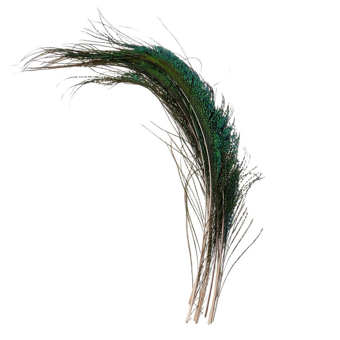 退屈させる果てしないショートDYNWAVE 10本 昆虫ルアー材料 帽子 カード 人工孔雀の羽 フライタイイング 装飾品 多機能