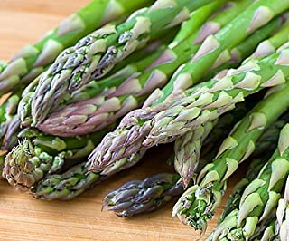 10 Asparagus Roots Jersey Supreme - MALE DOMINATE - TASTY - No GMOs