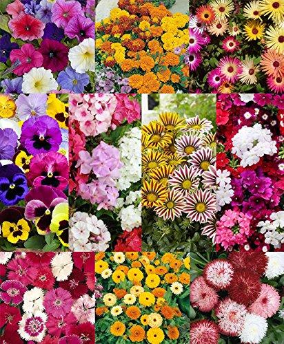 Seedscare Winter Flower Seeds Kit - 10 Types (Petunia, Marigold, Ice Plant, Pansy, Phlox, Gazania, Verbena, Dianthus, Daisy And Calendula)