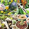Wikay 10 Outils de Jardin avec Sac de Transport Ensemble d'outils de Jardinage Comprenant Coupe-Fil Ciseaux de Coupe Crochet Racine pour Jardin, Ferme, Pelouse #5