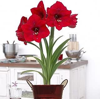Best send flower bulbs gift Reviews