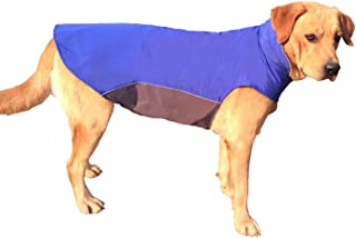 dog jacket petsmart