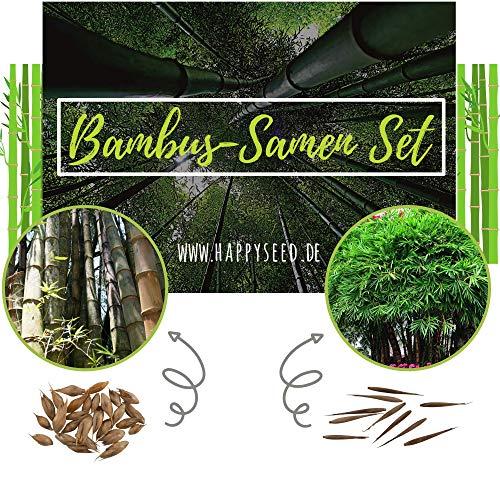 Bambus Samen mit hoher Keimrate - Bambussamen schnellwachsend & winterhart ideal als dekorativer Sichtschutz (2er Set: Moso Riesenbambus + Kalkuttabambus)
