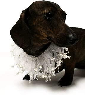 Best bridal dog collar Reviews