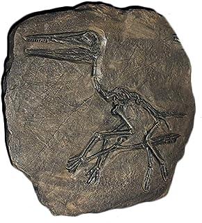 نموذج تمثال على شكل هيكل عظمي للديناصور، مصمم على الحائط على شكل ديناصور بيتيراصور، لعبة تعليمية علمية