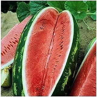 David's Garden Seeds Fruit Watermelon Allsweet SL1422 (Red) 50 Non-GMO, Heirloom Seeds