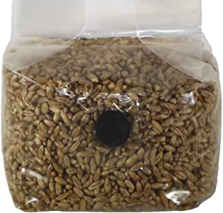rye berry substrate