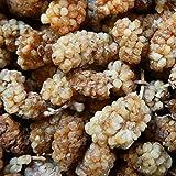 16,99€ (16,99€ pro 1kg) 1000g Bio Maulbeeren getrocknet weiß Rohkost | 1 kg | unbehandelt & ungeschwefelt | ohne Zucker & Zusätze | Trockenfrucht 100% Naturprodukt | kompostierbar verpackt DE-ÖKO-070