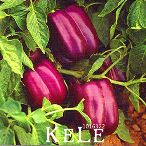 Vente chaude! 100 graines / Crystal Lot Violet Pepper poivrons pourpres rares Semences Potagères Jardin des Plantes Bonsai, # 18OFA8