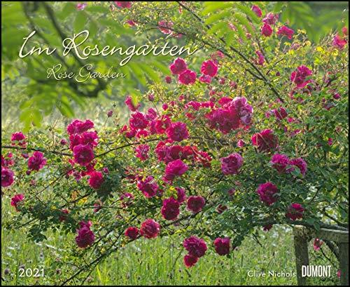 Im Rosengarten 2021 – DUMONT Garten-Kalender – Querformat 52 x 42,5 cm – Spiralbindung