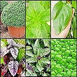 semi di basilico in 6 varietà: basilico greco, basilico lime, basilico gigante di napoli, basilico violetto, basilico cannella e basilico genovese + piccola guida coltivazione