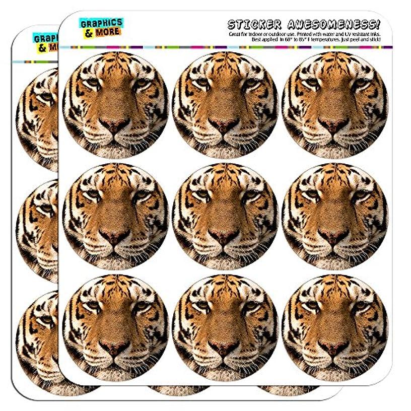 Bengal Tiger Face 2