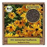 BIO Sonnenhut Samen Sorte Rudbeckia (Rudbeckia hirta) Blumensamen gelber Sonnenhut Saatgut