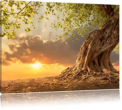 Pixxprint Baum als Leinwandbild | Größe: 120x80 cm | Wandbild | Kunstdruck | fertig bespannt