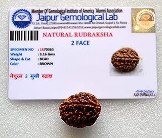 AwakenYourKundalini's Natural Rudraksha Beads (1,2,3,4,5,6,7,8,9,10,11,12,13,14 Faced) Original Rudraksha Beads Himalayan Origin Nepal Collections - Lab Certified - US Seller (2 Mukhi Faced)
