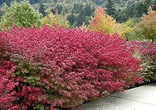 Best bush garden nursery Reviews