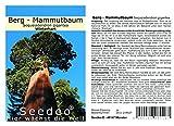 Seedeo® Berg - Mammutbaum (Sequoia. giganteum) 50 Samen