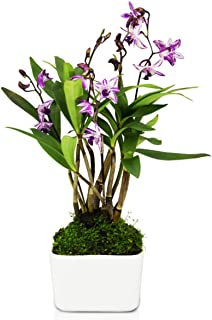 real orchid plant