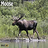 2020 Moose Wall Calendar by Br...