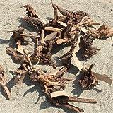 資 形おまかせ 流木 マングローブ S 約20cm
