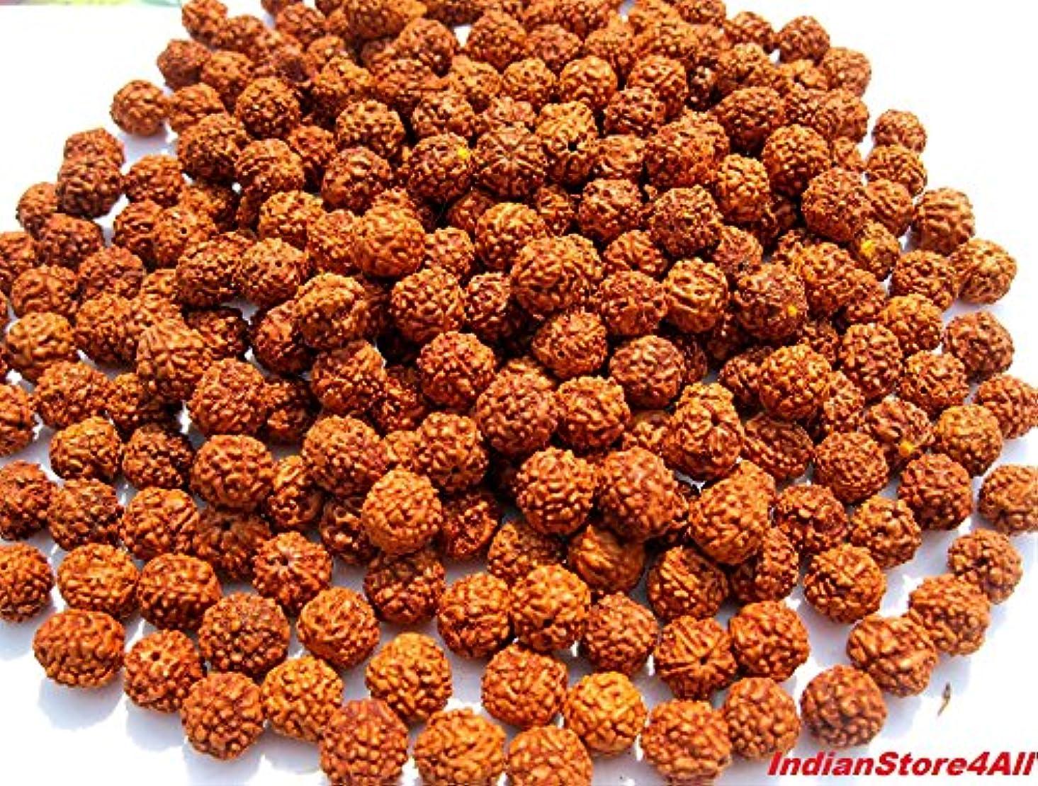 IndianStore4All - Lot of 1000 Rudraksh Seeds Loose Beads, Rudraksha Beads, 8mm rnmtq621631