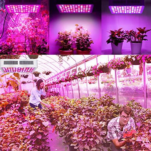 Lampe pour Plante 600W, Roleadro Lampe Horticole Croissance Floraison Full Spectrum Led Grow Light avec variateur VEG/BLOOM Canal pour Plantes Intérieur légumes et fleurs Hydroponique Germination